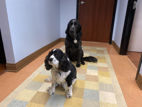 Wound Dogs at Encompass Healthcare in West Bloomfield - Dr. Bruce Ruben